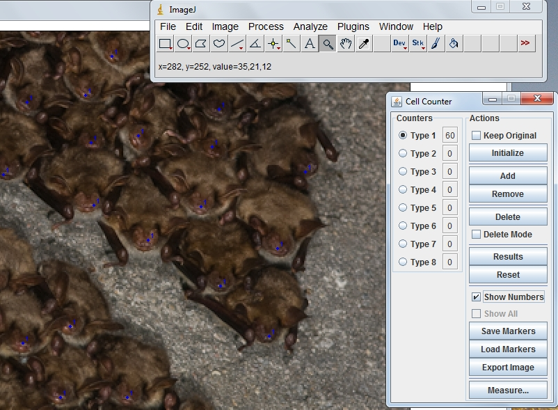 Counting Myotis myotis clusters from photos.